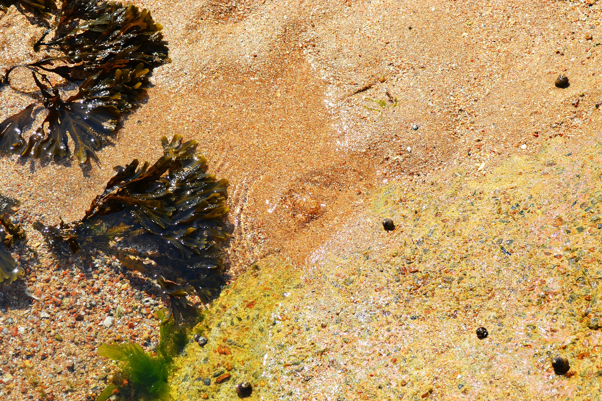 bladderwrack on the beach